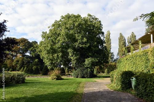 Foto Murales Rosengarten in Saathain