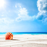 Summer background of shell on sand and free space for your decoration. Sunny day time and blue sky .