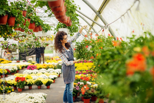 Wall mural Attractive curly florist woman holding hanging flowerpot in the colourful bright greenhouse near the edge.