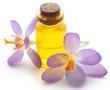 Постер, плакат: Saffron crocus flower with extract