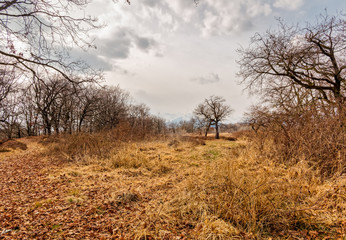 Italian Savannah of Baraggia, view of dry forest, Italy Natural Reserve, Baragge, Candelo