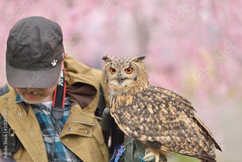 桜の森・フクロウと男性