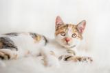 Kätzchen auf weißem Fell