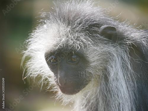 Monkey's face