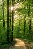 Sonnenstrahlen im Wald - 201558436