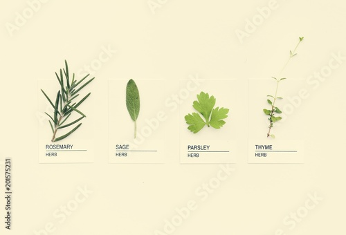 Foto Murales Different kinds of herbs