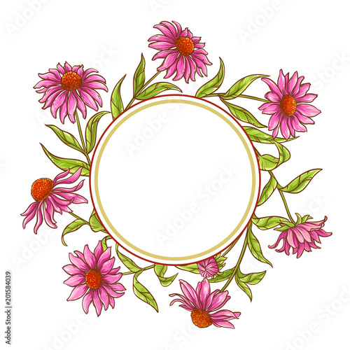 echinace purpurea vector frame