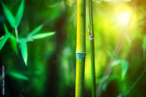Fotobehang Bamboe Bamboo Forest. Growing bamboo border design over blurred sunny background. Nature backdrop