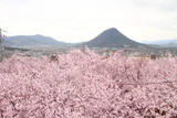 桜56 - 201691419