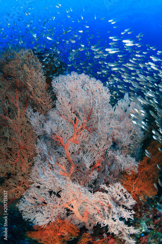 Delicate corals and tropical fish swarm around a colorful coral reef