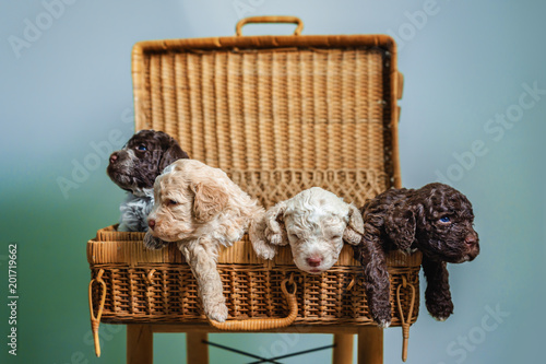 Cute little puppies sitting in the basket