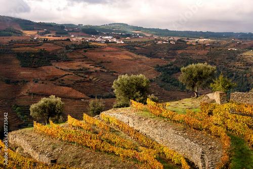 Fotobehang Chocoladebruin Douro River Valley