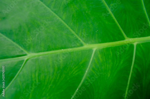 Green leaves background - 201743010