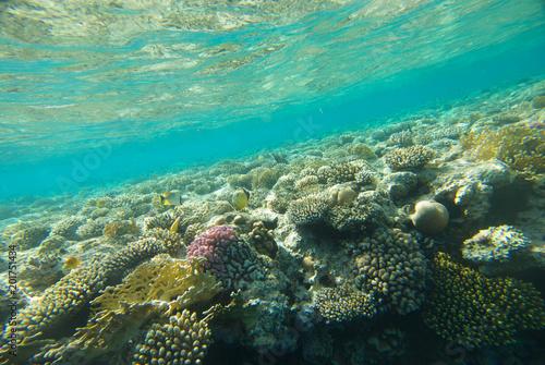 Foto Murales underwater landscape of the red sea