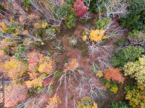 Foto Murales Fall Foliage from a Drone