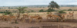 Herd of female Impala - 201786663