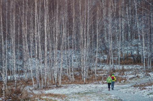 Fotobehang Berkenbos Birch trees in the autumn. First snow. Walking tourists.