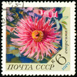 Ukraine - circa 2018: A postage stamp printed in USSR show flower Dahlia. Series: Flowers. Circa 1970.