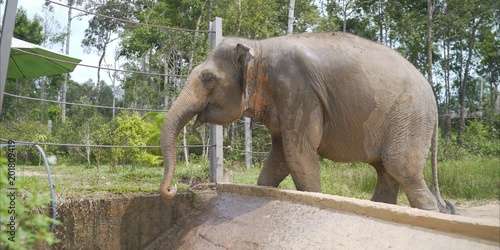 The elephant drinks from a hose in the zoo. Elephant in a safari park. The elephant drinks in the park. An elephant is drinking at the zoo.