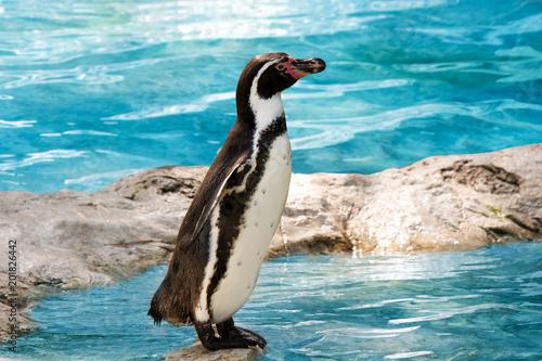zabawny pingwin stojący w wodzie