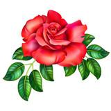 3D illustration of red rose  - 201826843