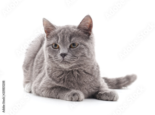 Jeden szary kot.