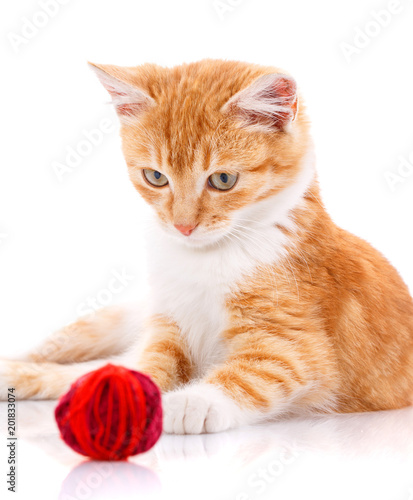 Foto Murales Cute orange kitten with white paws sitting next to a toy