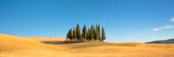 Beautiful typical tuscan panorama with cypress trees in a field in summer, Val d'Orcia, Tuscany, Italy - 201844472