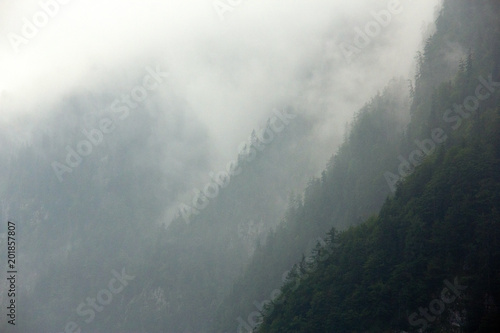 Foggy forest Alps - 201857807