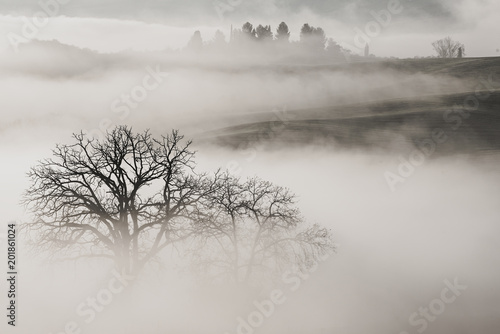 Beautiful foggy sunrise in Tuscany, Italy with vineyard and trees. Natural misty background in black and white - 201861024