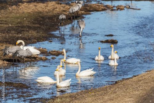 Birds at Hornborgasjön, Sweden