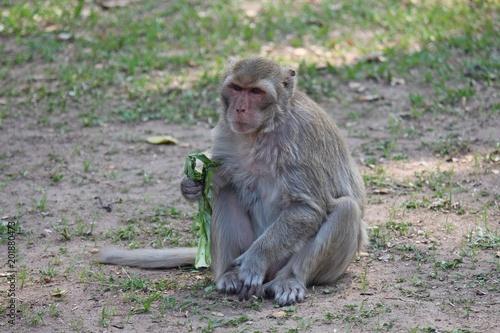 Foto Murales Monkey,  it is in Thai park,  Thailand Asia.
