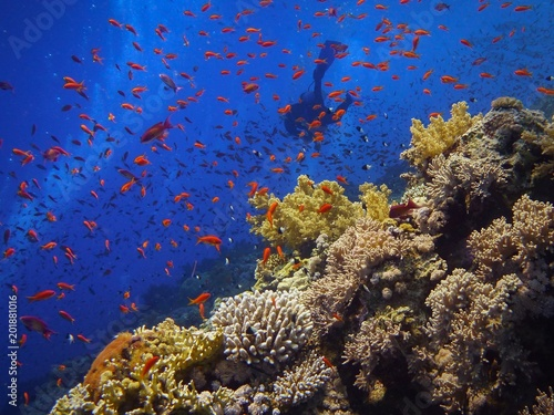 Beautiful underwater scenery, colorful coral reef with scuba divers on the background