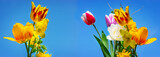 Colorful tulips and gold florets, blue sky - 201882687