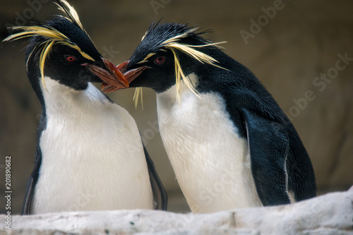 Aluminium Pinguin two penguins kissing