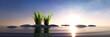 Steine mit Gras im Meer bei Sonnenuntergang