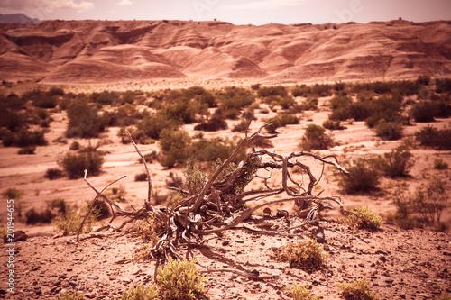 Desert landscape of province of La Rioja