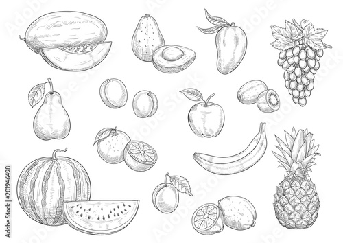 Fruit isolated sketch set for food, juice design
