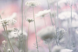 Lovely soft blurred meadow flower background. Selective focus used. - 201987223