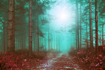 Fantasy colored foggy forest path with mystic foggy light. Color filter effect used. © robsonphoto
