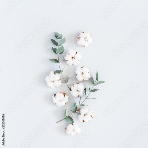 Kompozycja kwiatów. Wzór robić bawełniani kwiaty i eukaliptus rozgałęzia się na pastelowym błękitnym tle. Widok płaski, widok z góry, kwadrat