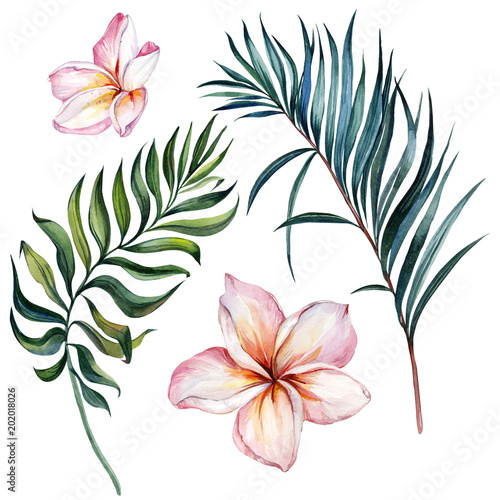 Tropical exotic floral set. Beautiful pink plumeria flowers and green palm leaves isolated on white background. Watercolor painting. © katiko2016