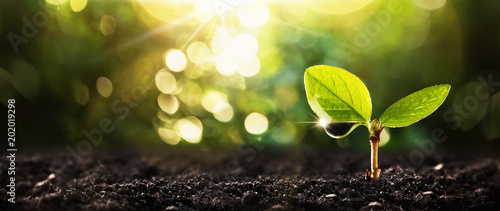 Young Plant in Sunlight © Maksim Pasko