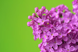 Lilac flowers - 202032885