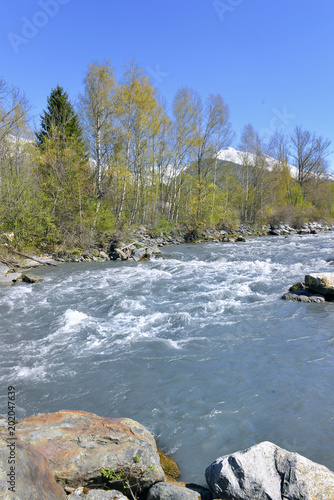 Foto Murales alpine stream along trees with rocks in spring and under blue sky