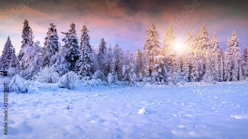 Foto Murales winter forest