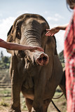 Elephants in Chiang Mai - 202078052