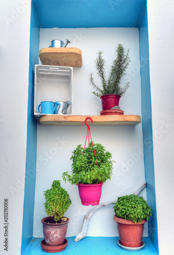 Beautiful decoration pot with green flower in it outside of a window at Serifos Island in Greece