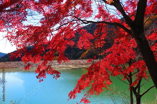 Plexiglas Rood paars 湖の秋の風景18