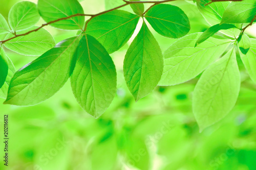 新緑イメージ - 202116812